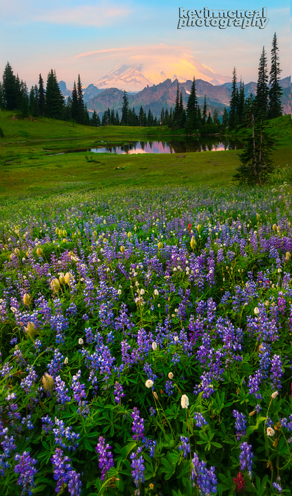 Shooting Wildflowers With Impact – Kevin McNeal