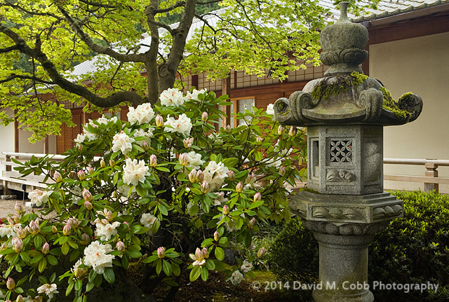 Tips for Photographing a Japanese Garden in Spring by David Cobb