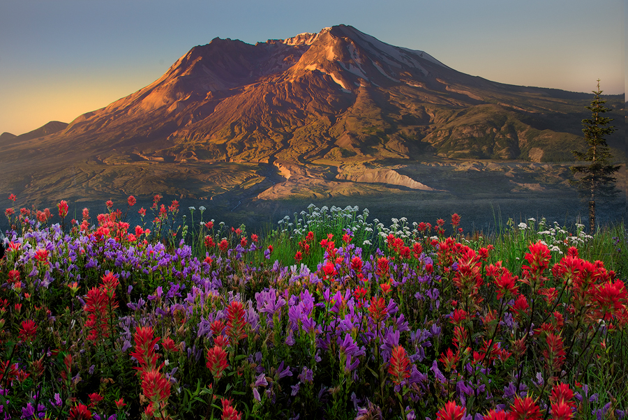Best Wildflower Hikes And Tips For Photographing Mt St Helens