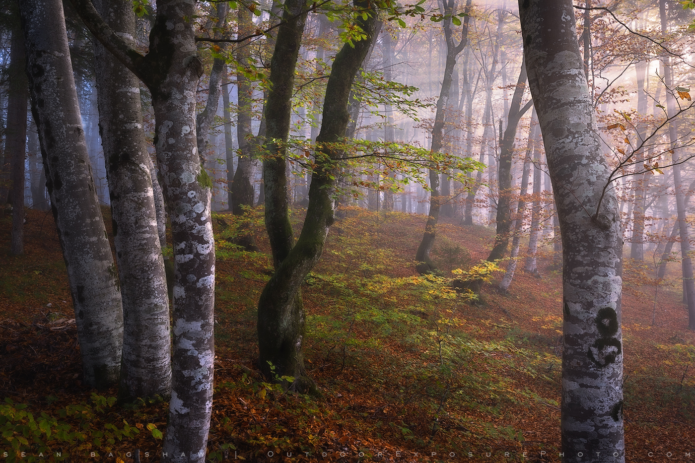 Misty woods near Lake Bohinj, Slovenia.