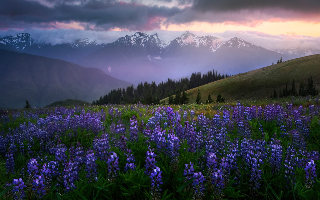 From The Archives – Photographing Wildflowers for Impact.-Kevin McNeal