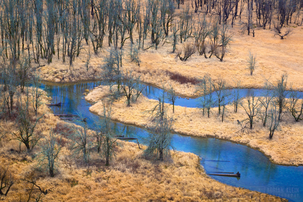 """Winter Still"" - A slow moving stream meanders through a marsh area in the Columbia River Gorge. These are not burnt or dead trees. This photo is about new views that can materialize after a fire.  In this case a view of this area was harder to achieve pre-fire."