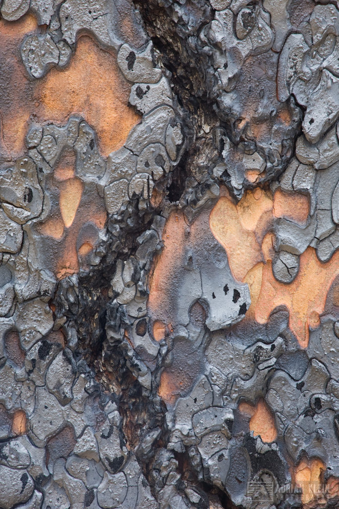 """Charcoal"" - While out hiking I noticed a small patch of burnt bark just charred enough to show as metallic gray along with interesting patterns."