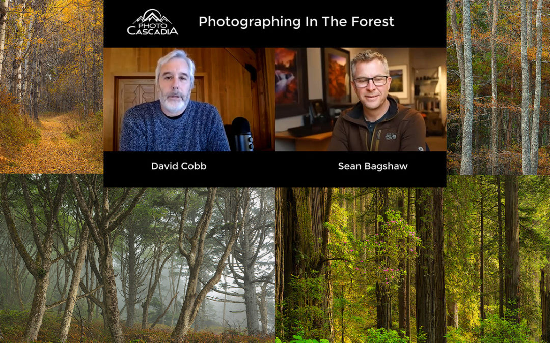 Photographing In Forests: Wide Angle with Photo Cascadia – Episode 2